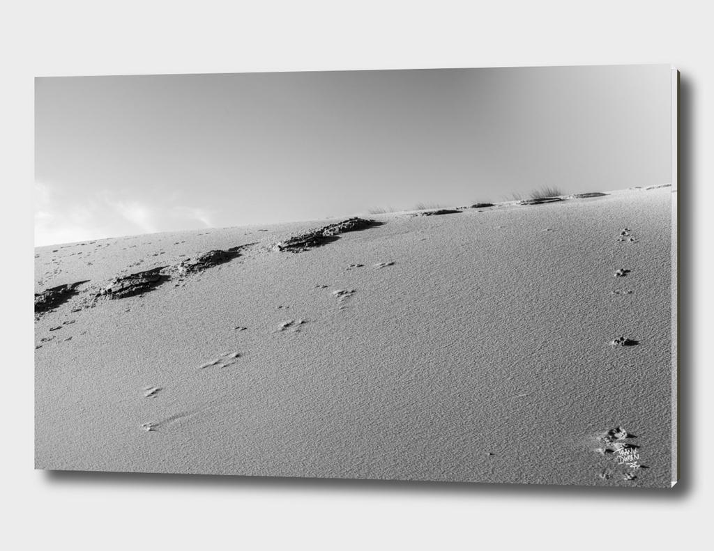 Dune #1
