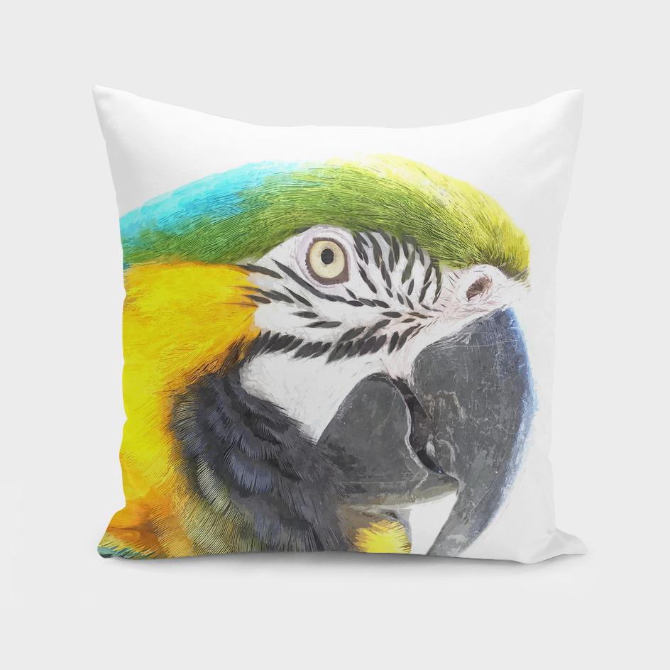Macaw Portrait