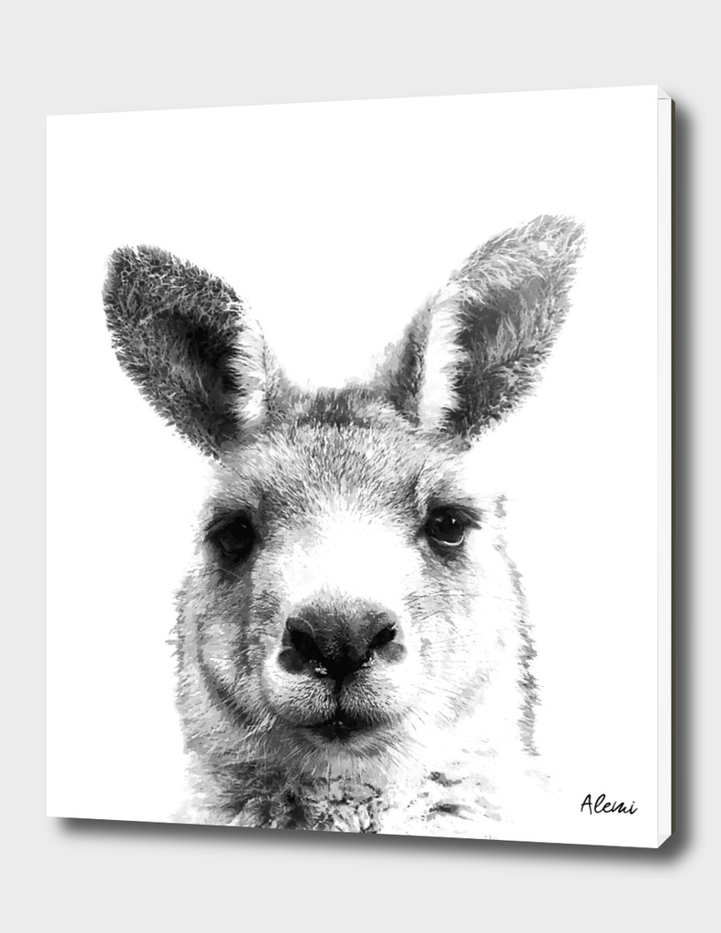 Black and White Kangaroo