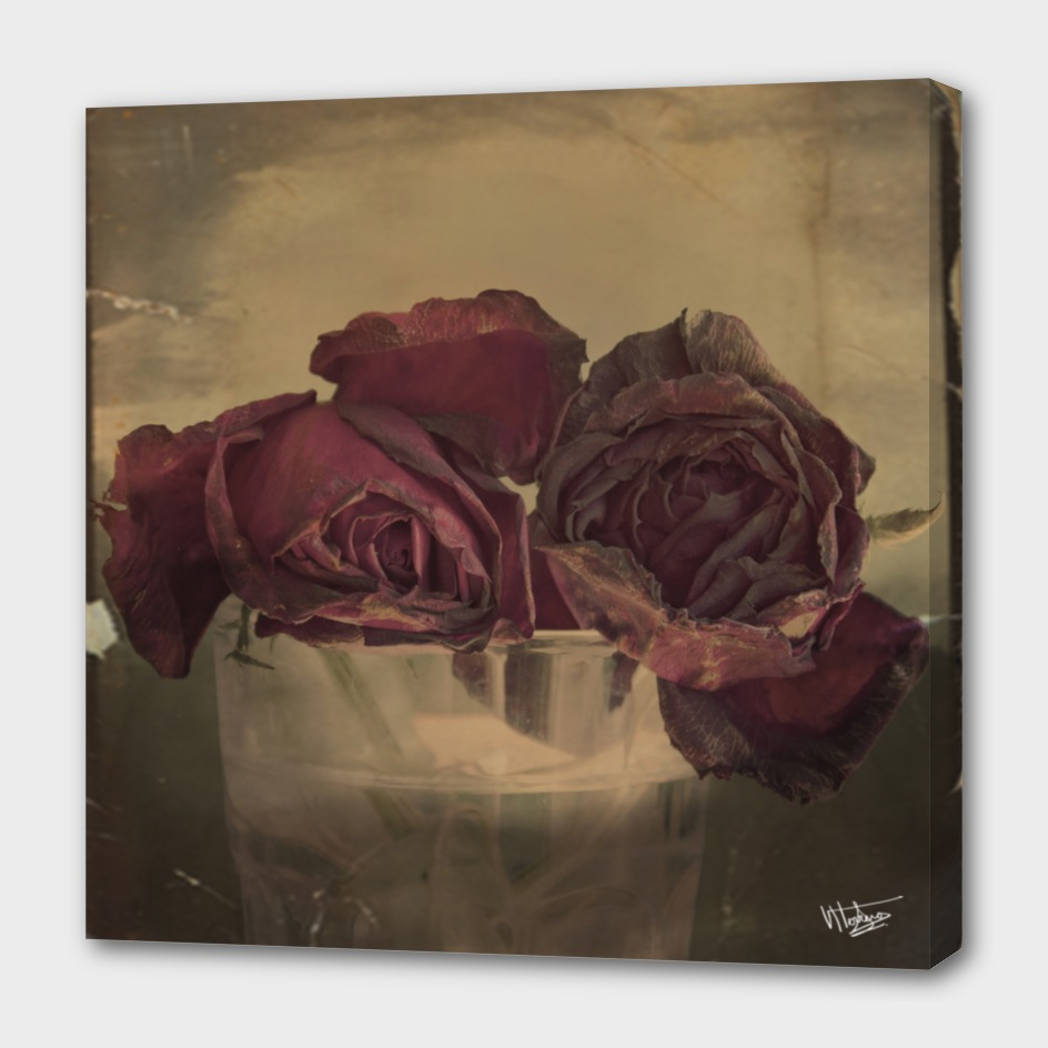 The Veins of Roses