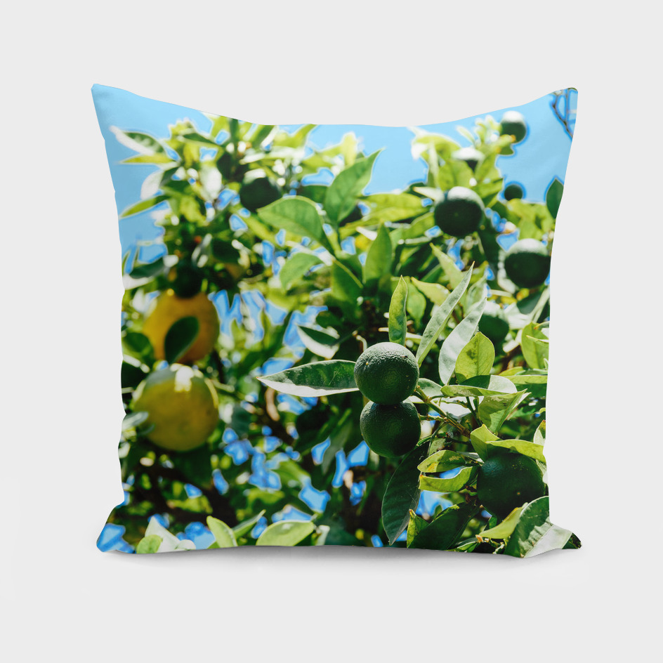 Green And Ripe Oranges In Orange Tree