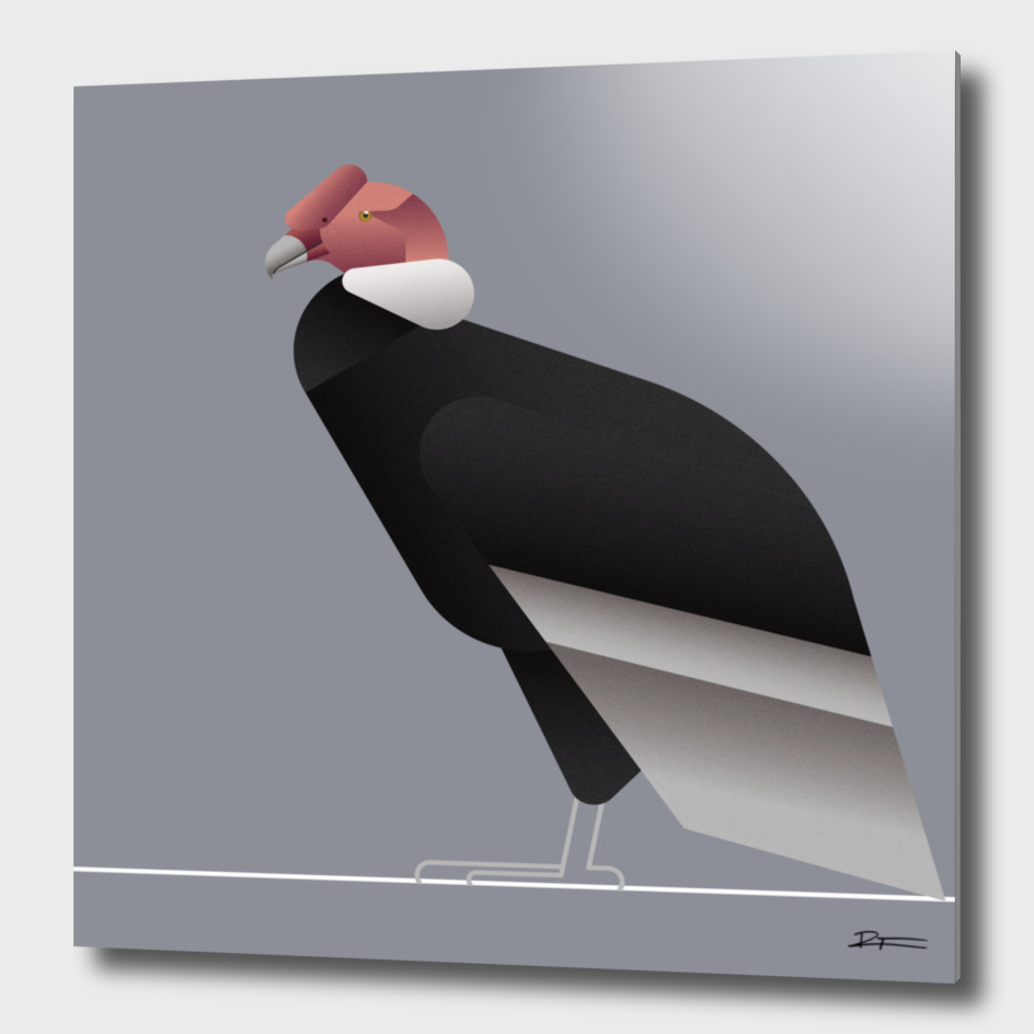 Vultur gryphus a.k.a. Andean Condor