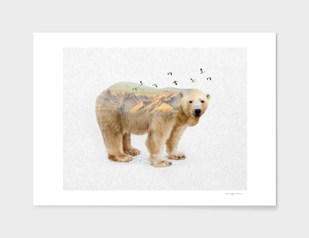 Wild I Shall Stay | Polar Bear