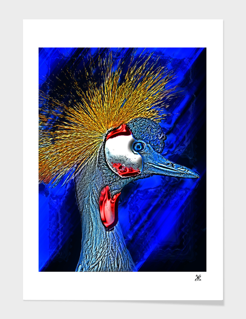 Black Crowned Crane