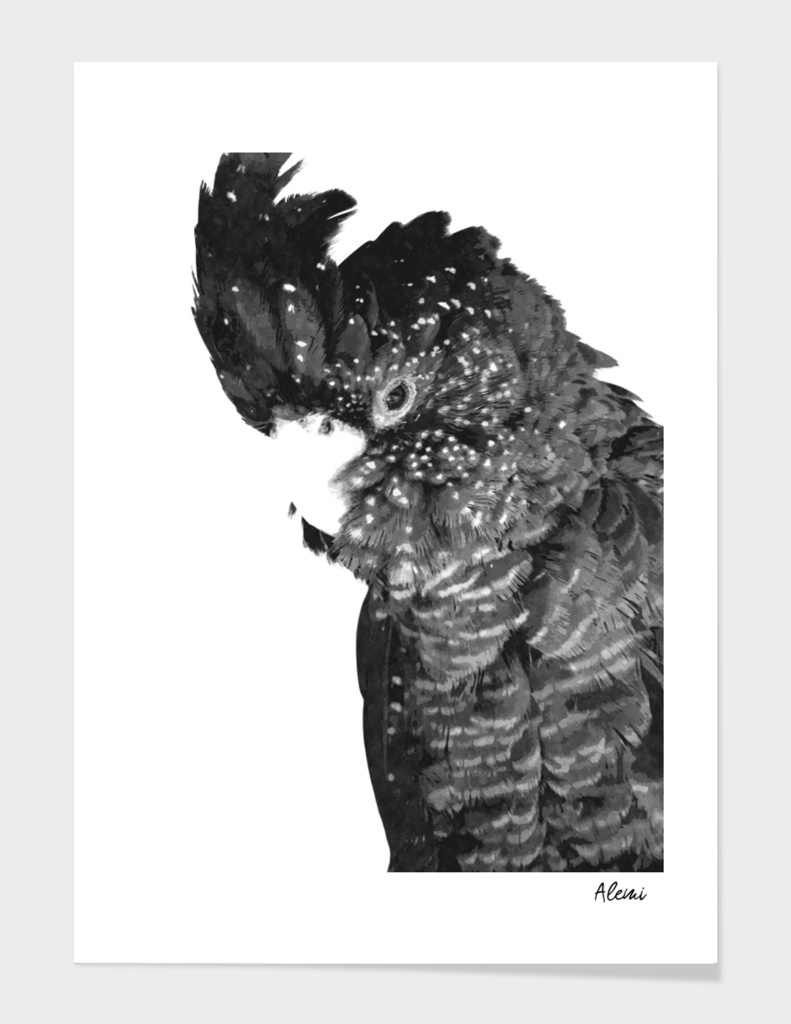 Black and White Cockatoo Illustration