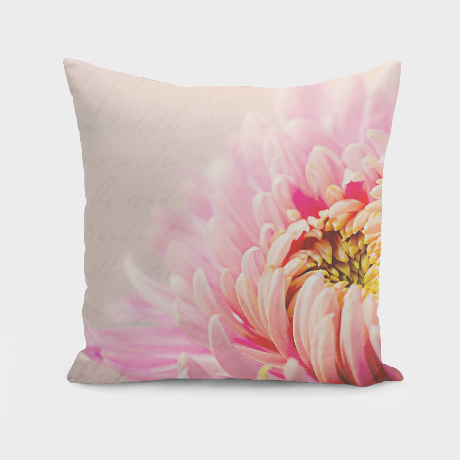 Chrysanthemum Autumn Pink