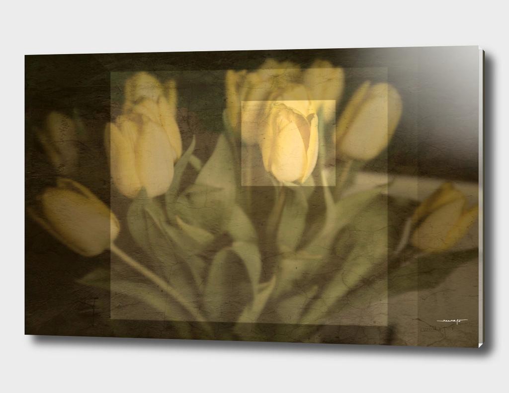The One Tulip