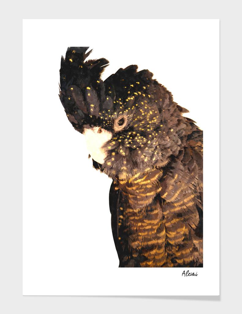Black Cockatoo Illustration