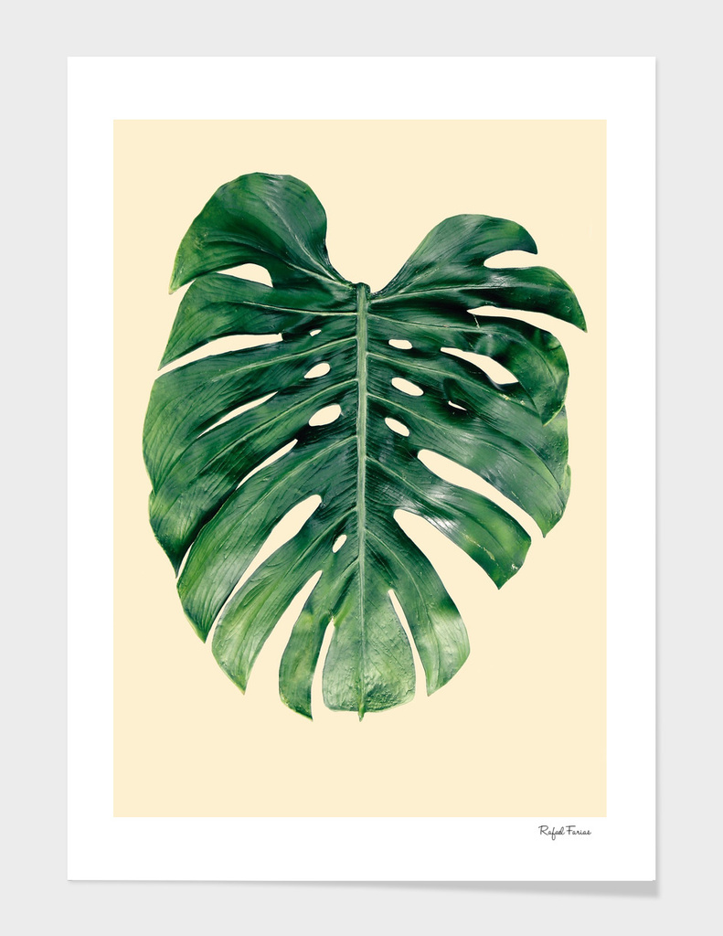 MONSTERA YELLOW
