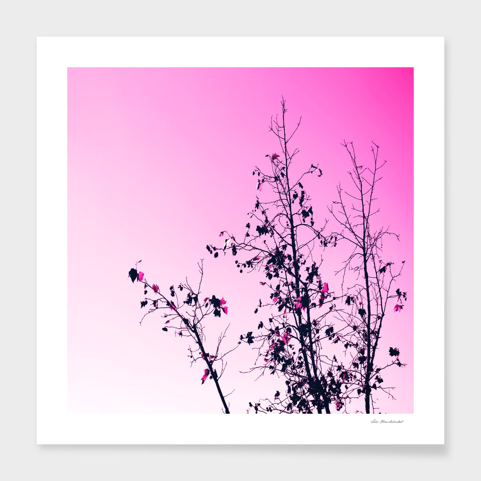 tree branch with pink background