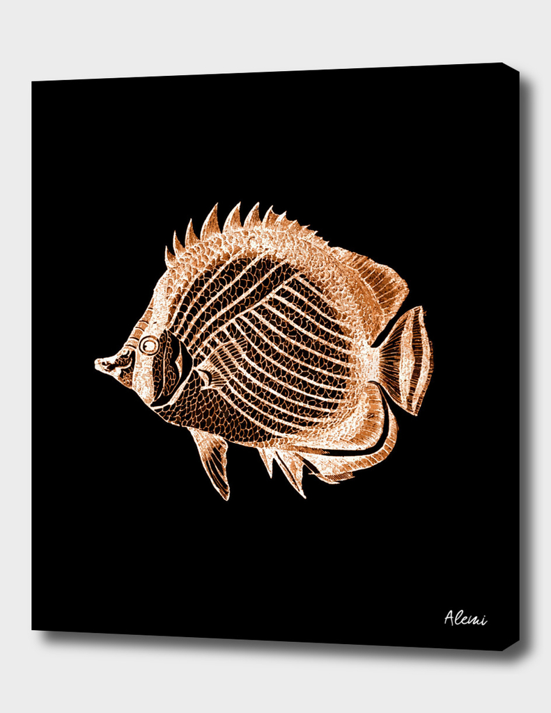 Fish Black Background