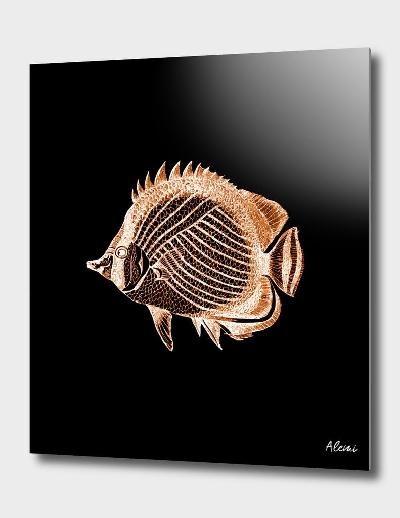 Fish Black Background