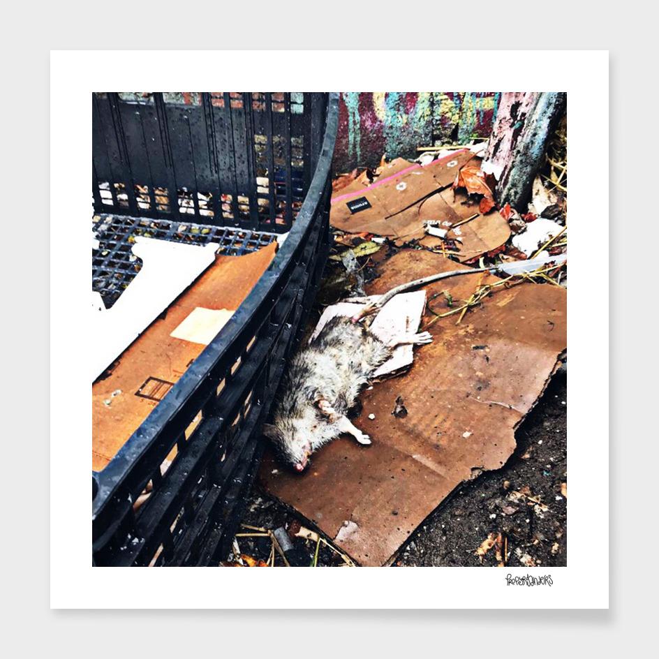 Alley-Rat