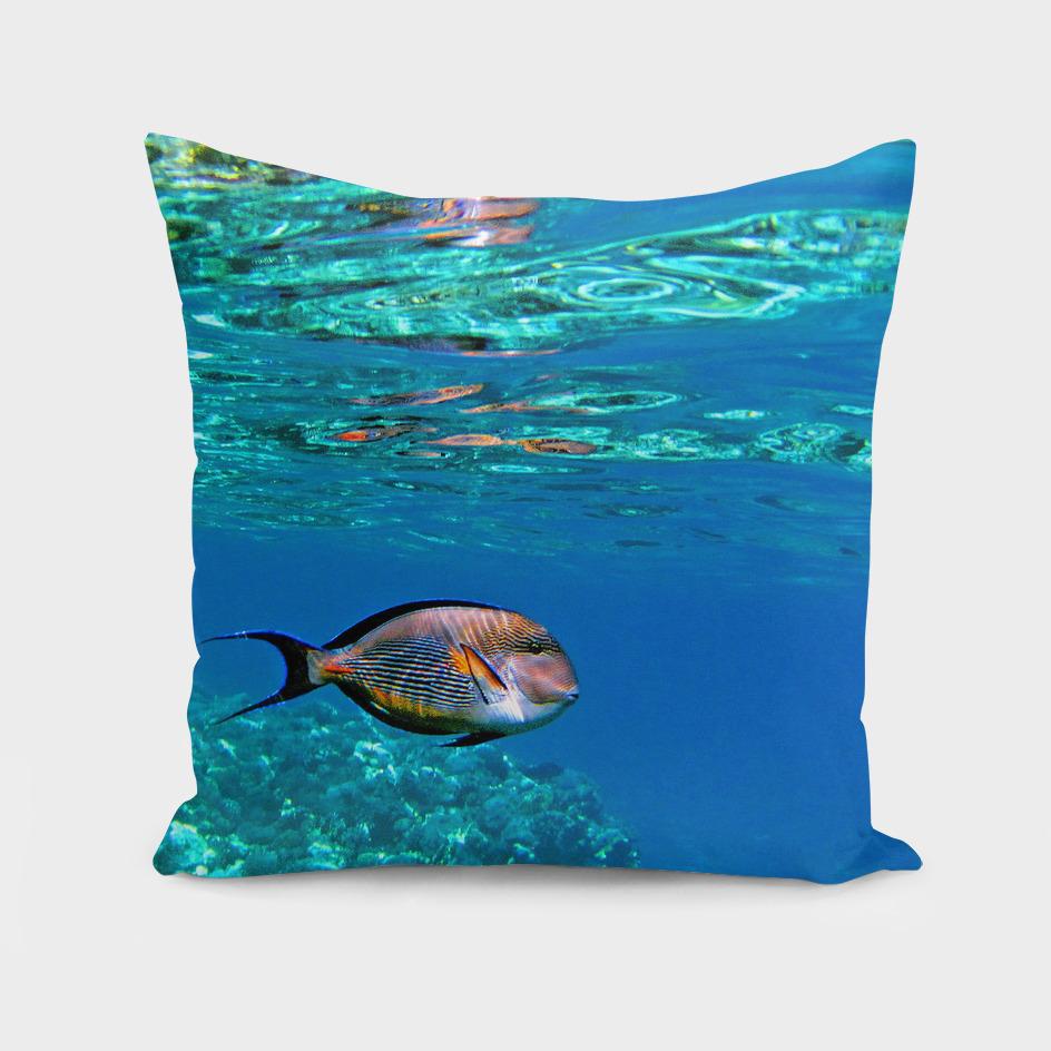 Underwater World. Surgeon Fish.