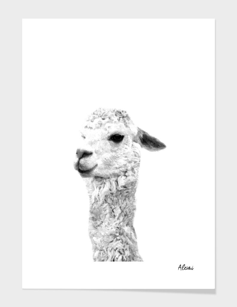 Black and White Alpaca