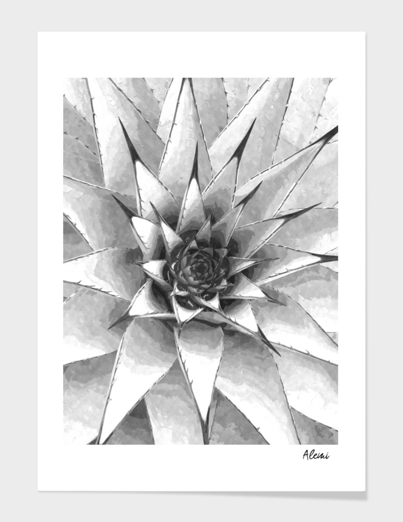 Black and White Cactus Succulent