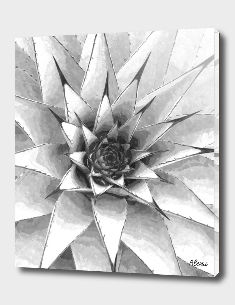 Black and White Cactus Succulent