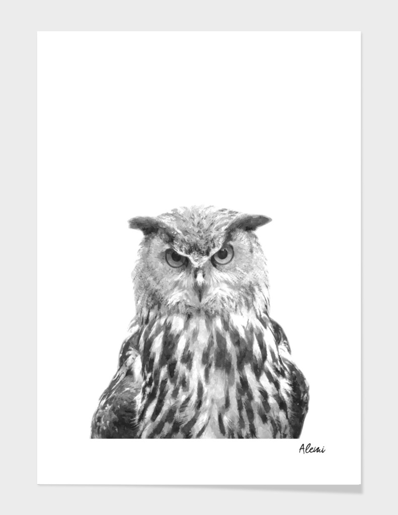 Black and White Owl Portrait