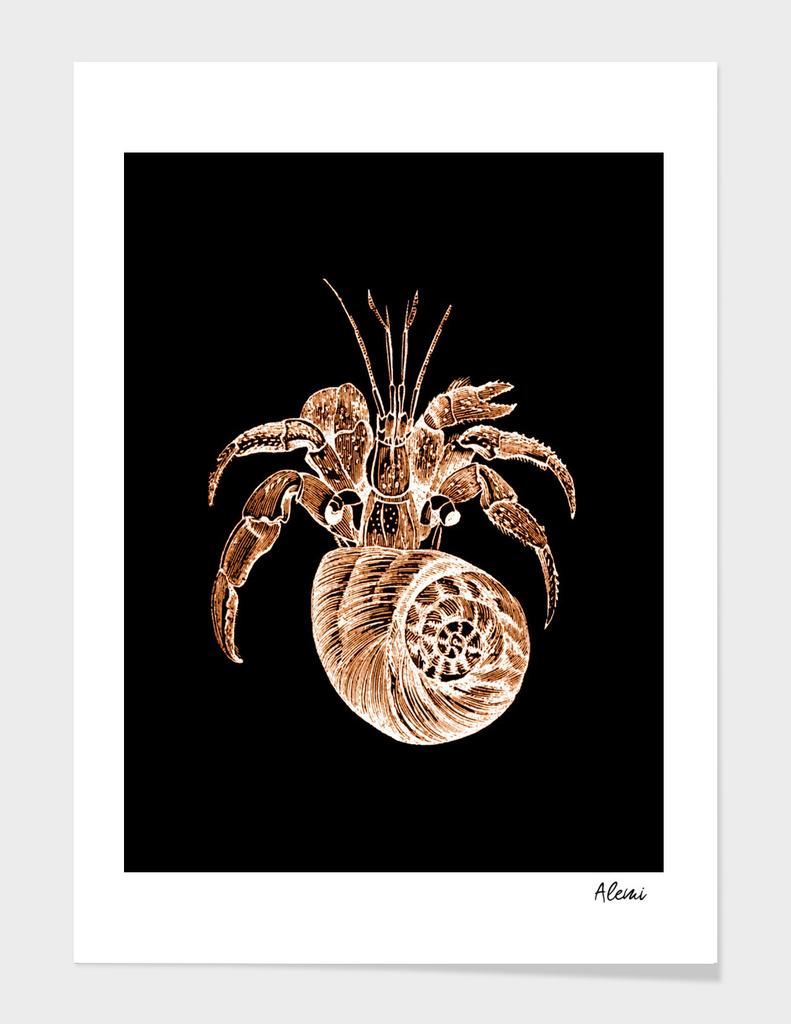Shellfish black background