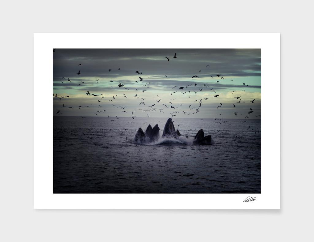 Whale Sealife Fish