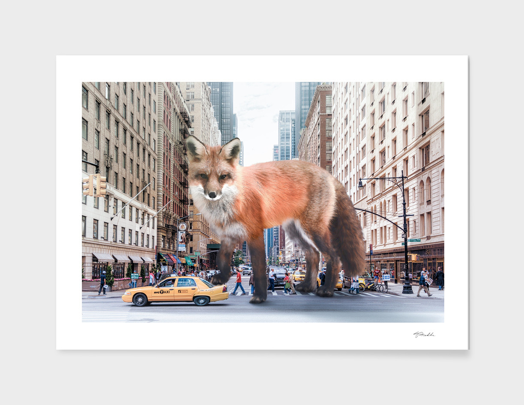 fox in new york