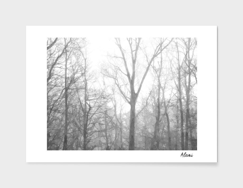 Black and White Forest Illustration