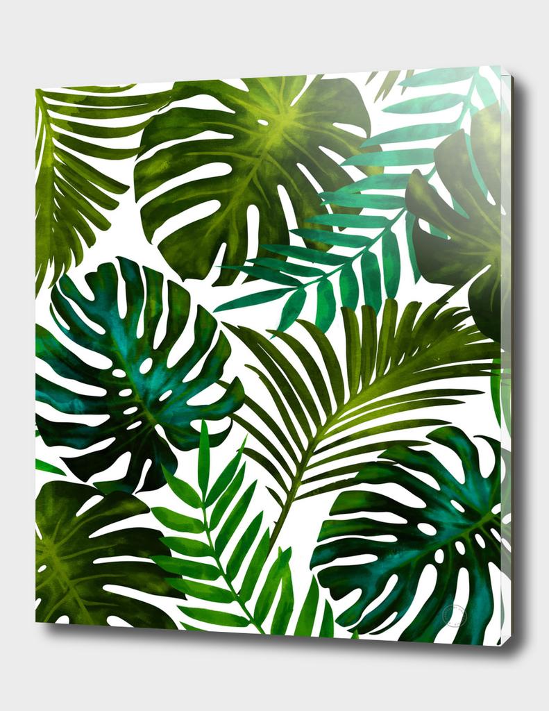 Tropical Dream V2