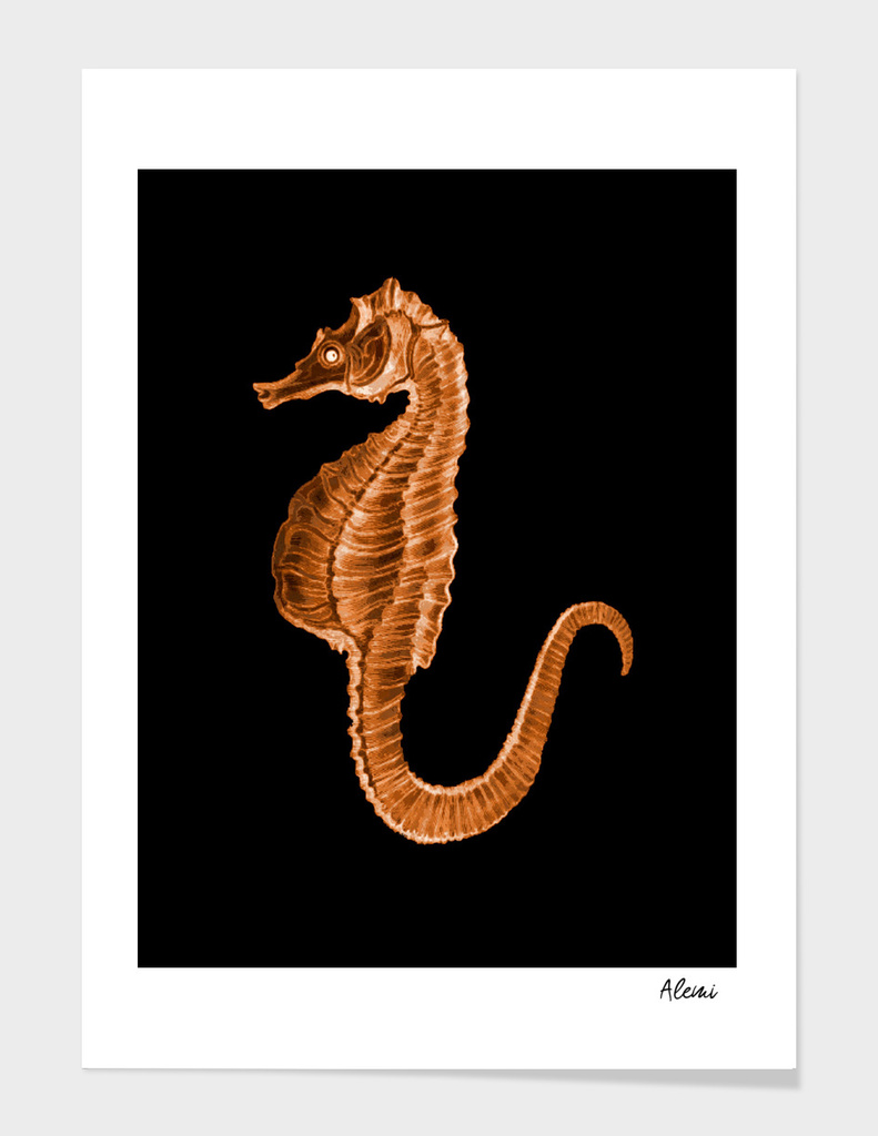 Seahorse Black Background