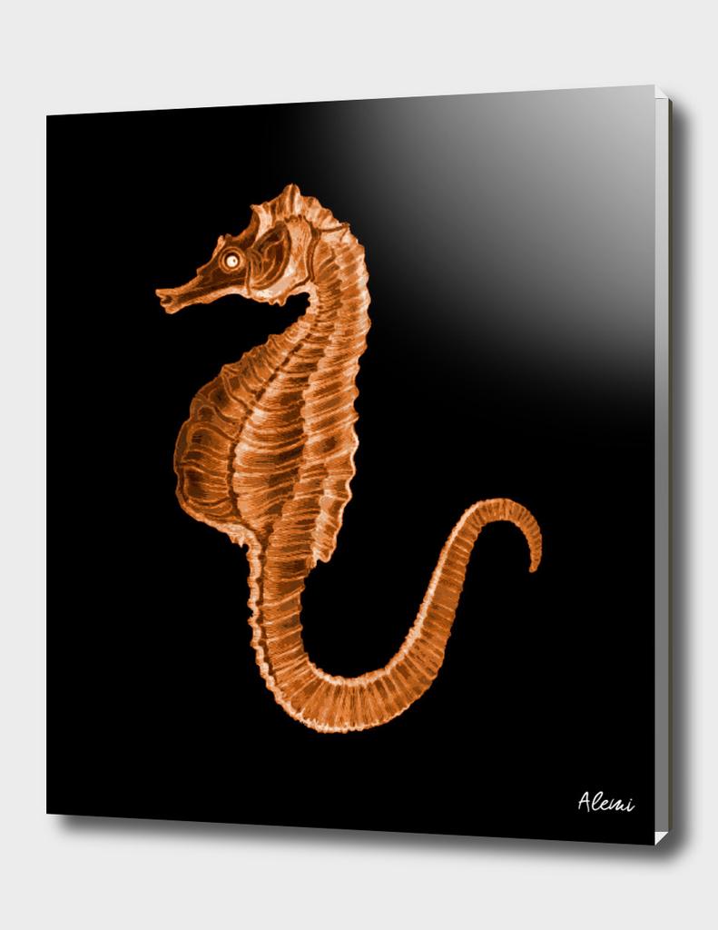 Seahorse Black Background
