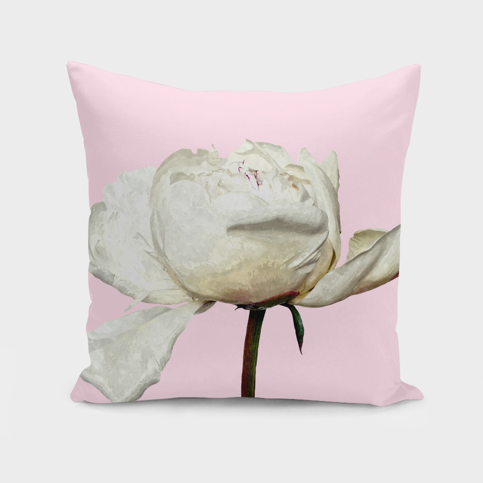White Peony Pink Background