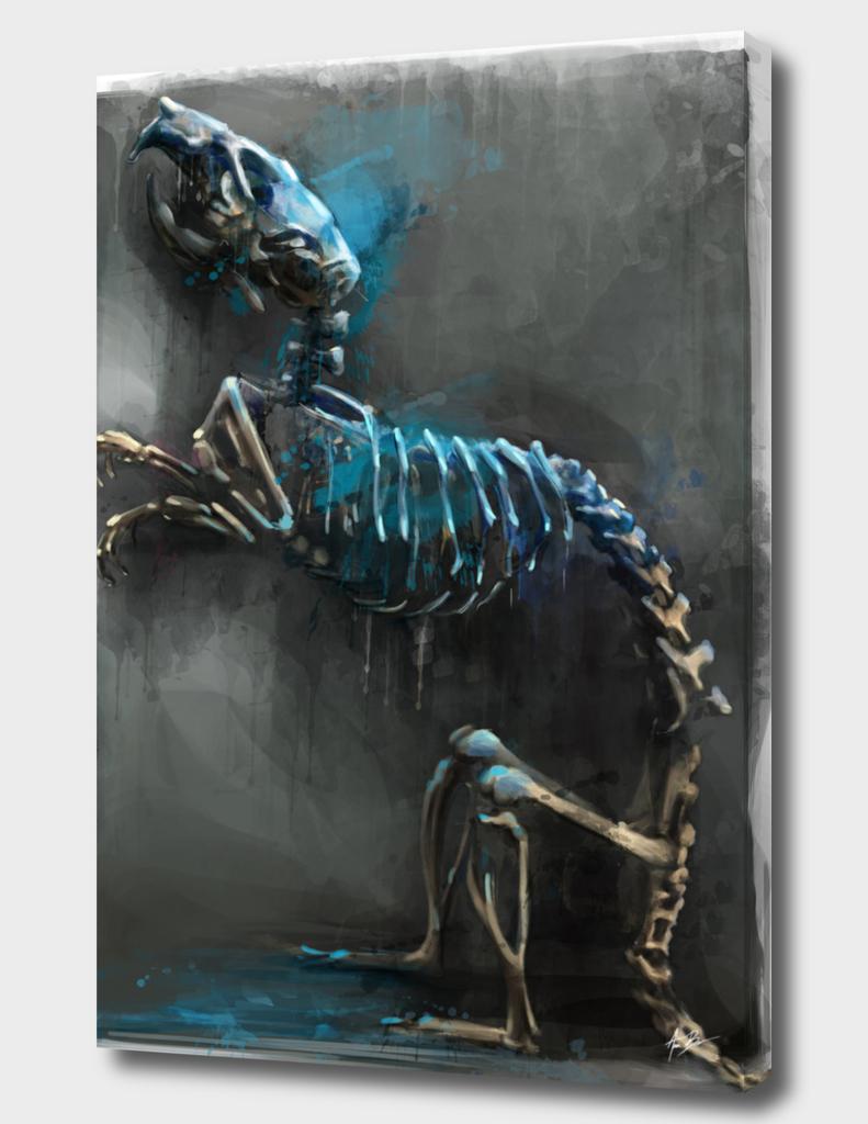 Rat anatomy