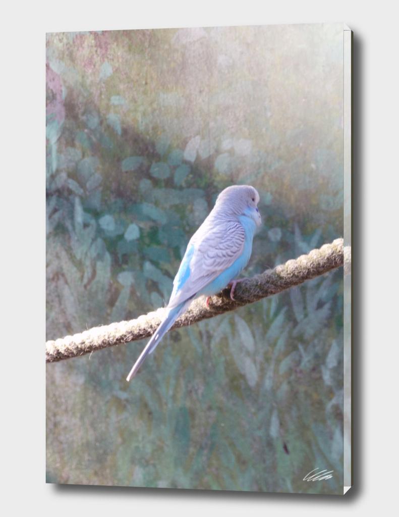 Wildlife Budgie Bird