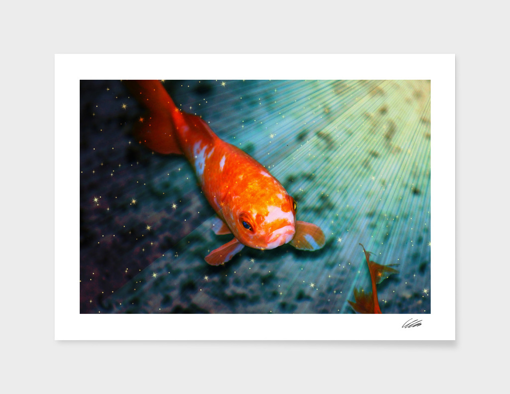Sealife Fish with Stars