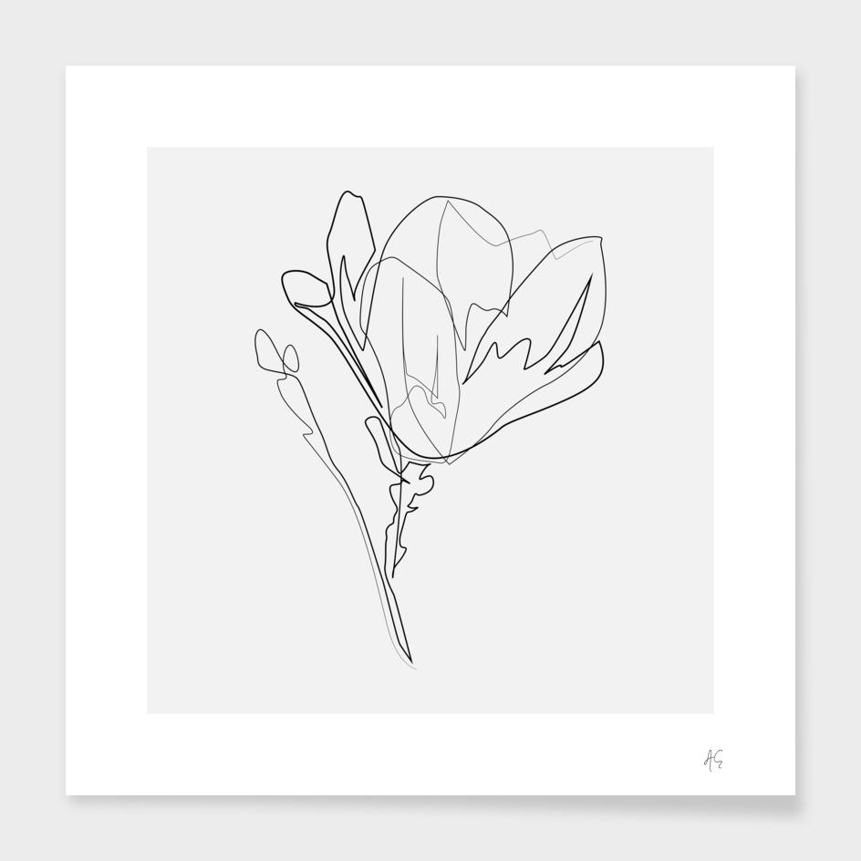 Magnolia Flower Print #4