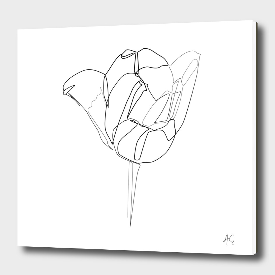 Tulip Flower Print #2