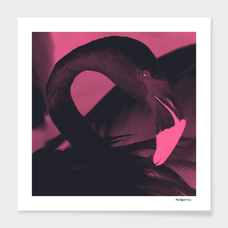BLACK SWAN ART ILLUSTRATION