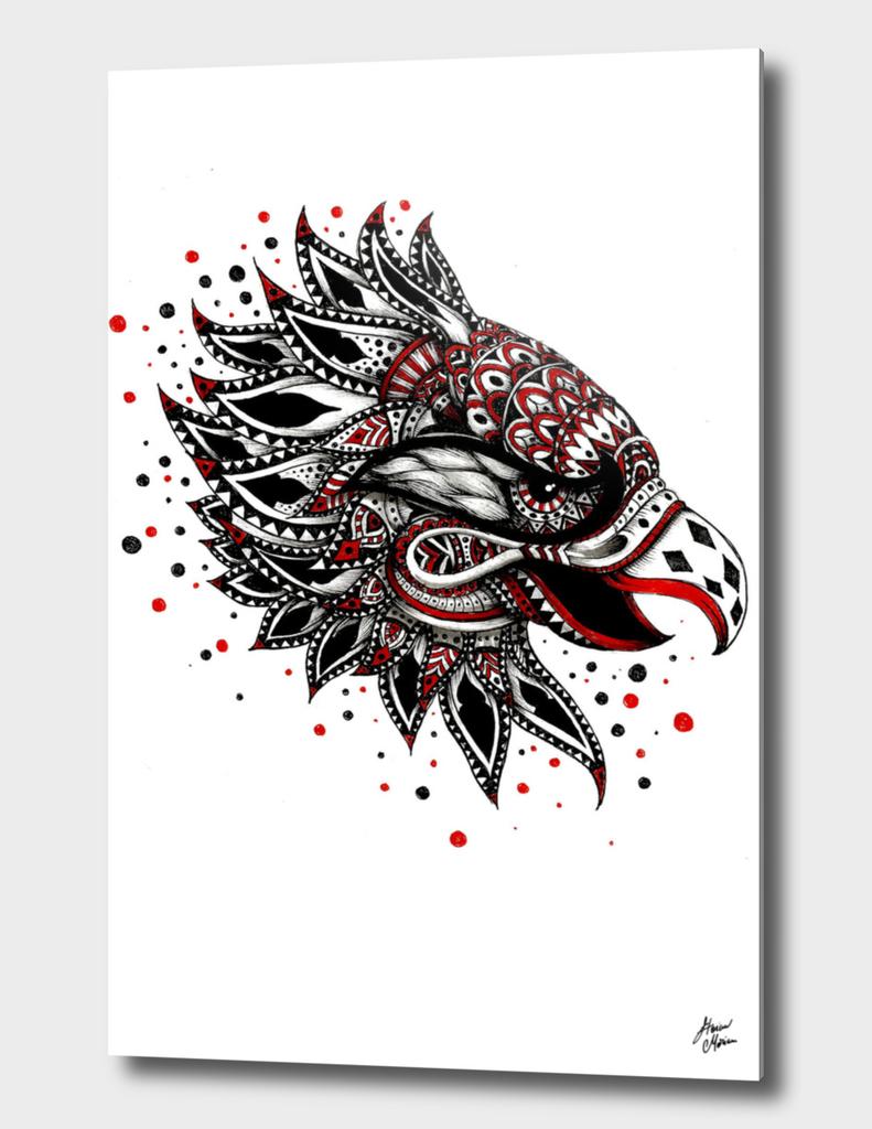harpie_eagle_START