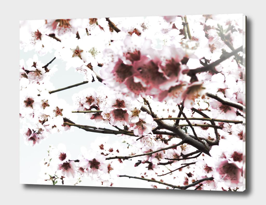 Sakura X