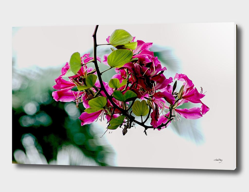 BOT07 - The Violet Flower