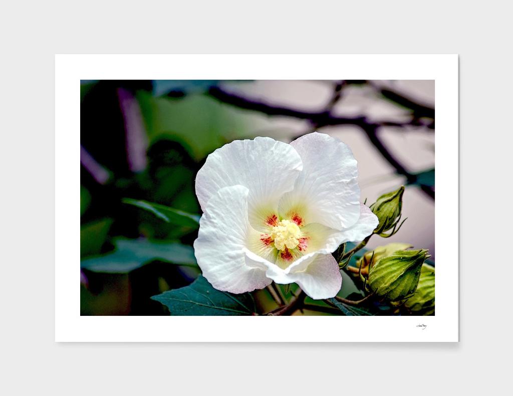 BOT12 The White Flower