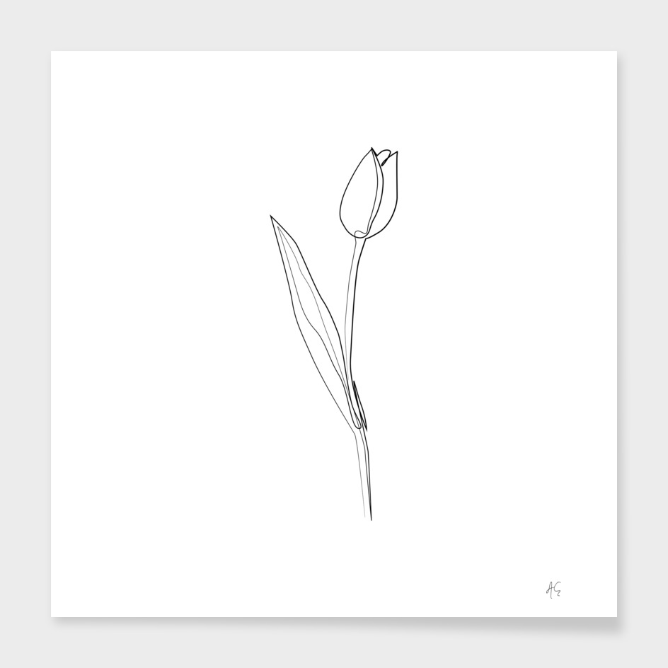 Tulip Flower Print #3