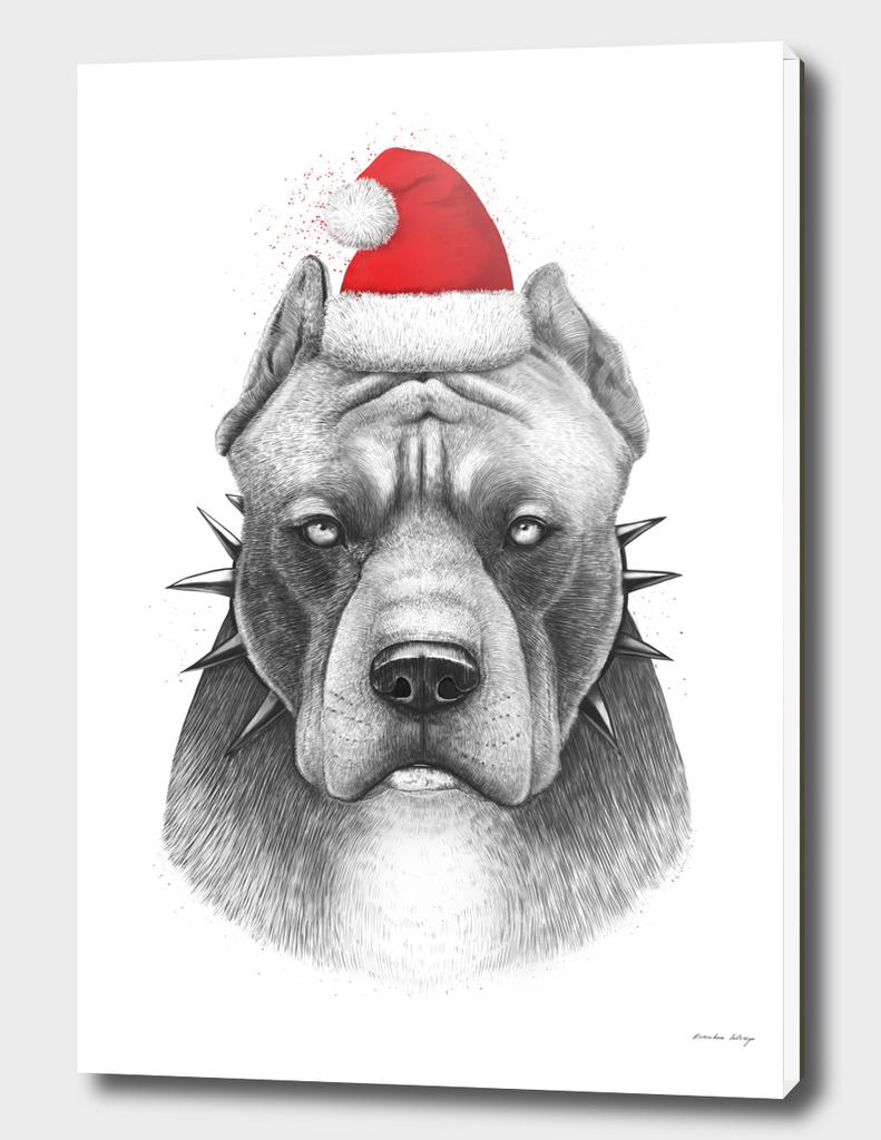 Winter Pit bull