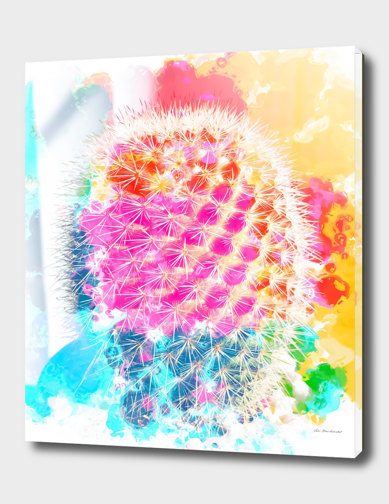 cactus with colorful painting abstract in pink blue orange