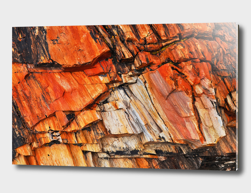 Orange Petrified Wood