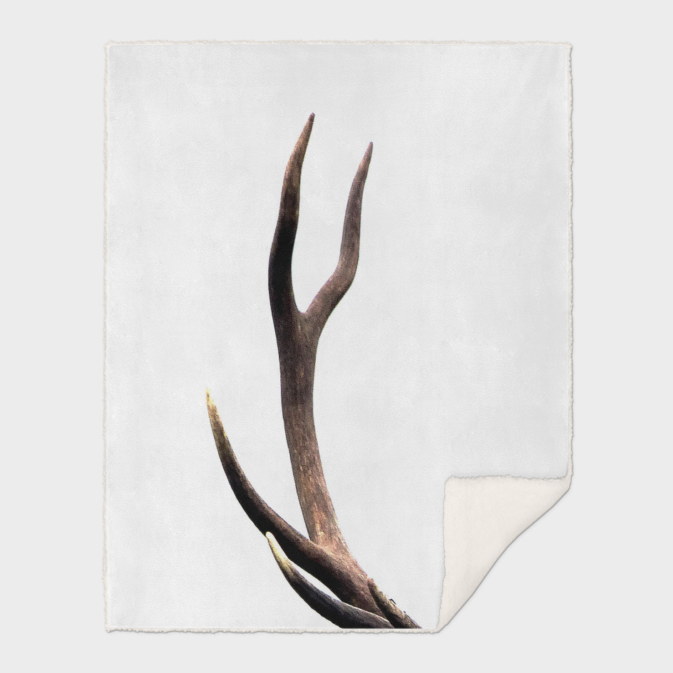 Stag antler