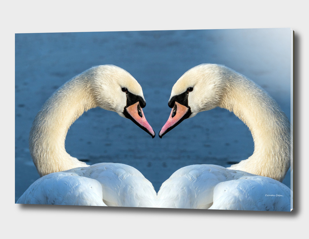 Heart-shaped swans