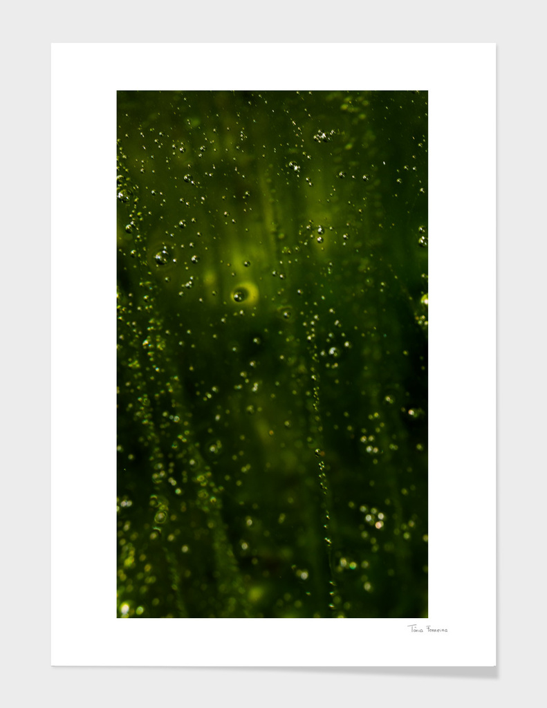 Macro Green