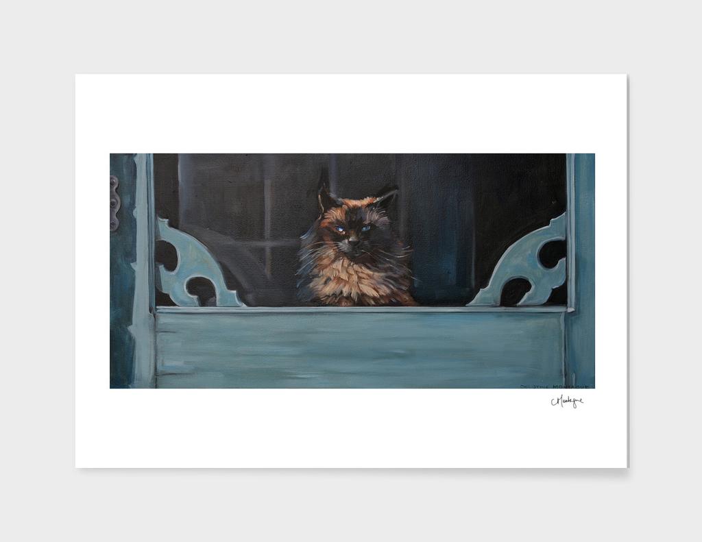 Ragdoll Cat Blue Eyes Inside