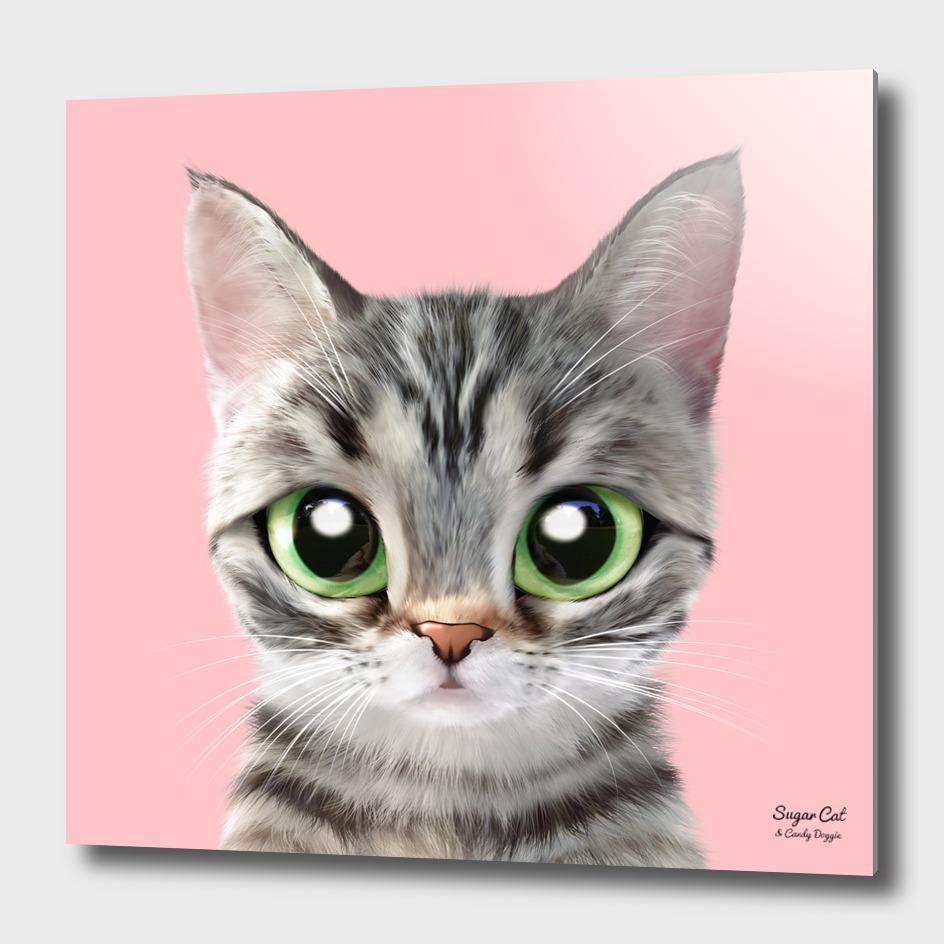 Momo the American short hair cat