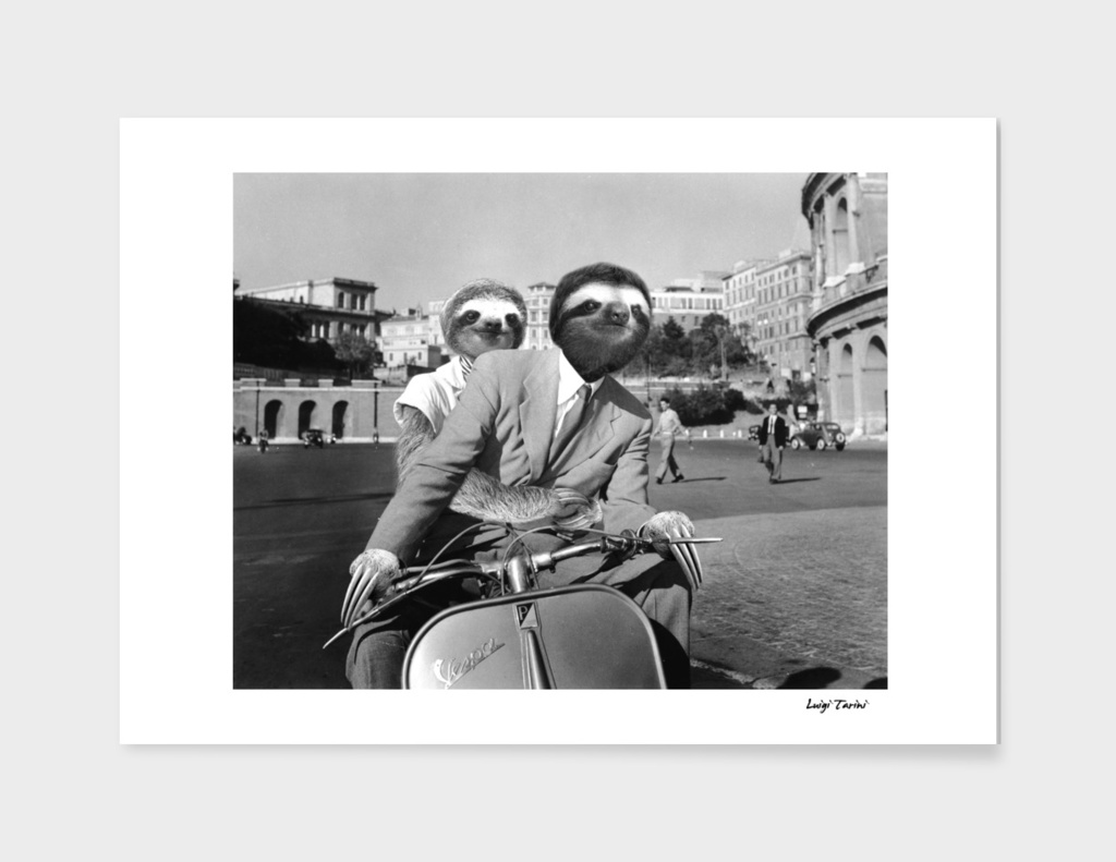 Sloth in Roman Holiday
